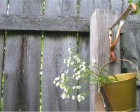 De rustieke Foto van Omheiningsdaisies flowers country Royalty-vrije Stock Fotografie