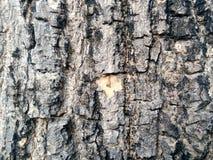 De rustieke textuur van de boomschil Royalty-vrije Stock Fotografie