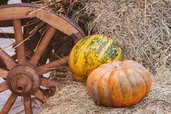 De rustieke uitstekende herfst, dalingsachtergrond met rijpe grote geribbelde pompoenen op stro dichtbij houten wiel van kar, wij stock foto's