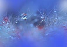 De rustige abstracte achtergrond van de close-upkunst Abstracte macrofoto met waterdalingen Kunstfotografie Onderaan van paardebl Stock Fotografie
