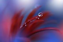 De rustige abstracte fotografie van de close-upkunst Druk voor behang Bloemenfantasieontwerp Stock Afbeelding