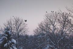 De rustige winter lanscape met vogels het vliegen Royalty-vrije Stock Foto's