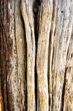 De ruwe en doorstane schors van een cederboom stock foto