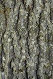 De ruwe en geribbelde schors van de oude boom Royalty-vrije Stock Fotografie