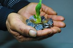 De ruwe handen die muntstukken en jonge boompjes het Leven houden is niet gemakkelijk het ` s moeilijk voor landbouwers om geld t stock fotografie