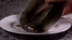 De ruwe paling ligt op een witte plaat stock footage