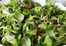 De ruwe Salade van Songino en van de Granaatappel Royalty-vrije Stock Foto