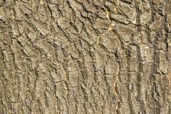 De ruwe textuur van de boomhuid Stock Afbeelding