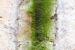 De ruwe textuur van de Muur Royalty-vrije Stock Foto's