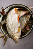 De ruwe vis is in ijzerhoudend vaatwerk Stock Foto's