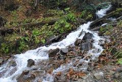 De ruwe waterval van de bergrivier Stock Afbeeldingen