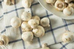 De ruwe Witte Organische Paddestoelen van de Babyknoop Royalty-vrije Stock Afbeelding