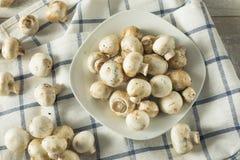 De ruwe Witte Organische Paddestoelen van de Babyknoop Royalty-vrije Stock Afbeeldingen
