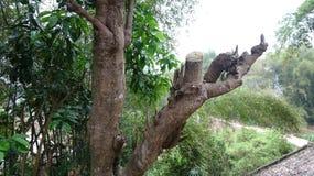 De sågade träden förfallas gradvist royaltyfri bild