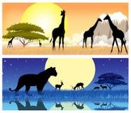 De safari van Afrika met silhouetten van dieren Stock Foto