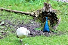 De Safari van het Parcpark, Hemmingford, Quebec, Canada stock afbeelding