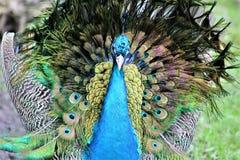 De Safari van het Parcpark, Hemmingford, Quebec, Canada royalty-vrije stock foto's