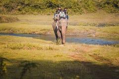 De Safari van de olifantswildernis bij het nationale park Nepal van Chitwan royalty-vrije stock foto's