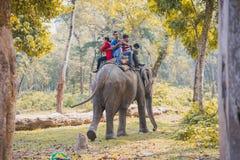 De Safari van de olifantswildernis bij het nationale park Nepal van Chitwan royalty-vrije stock foto