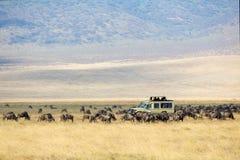 De safaritoeristen op spel drijven in Ngorongoro Stock Fotografie