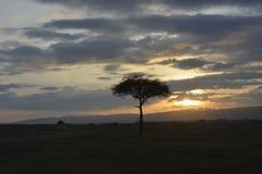De safarizonsopgang van Afrika Royalty-vrije Stock Foto's