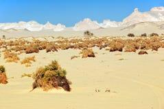 De Sahara Stock Fotografie