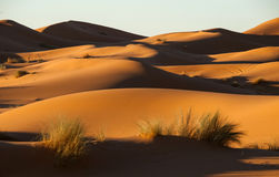 De Sahara bij zonsondergang stock foto's