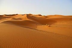 De Sahara sanddunes Stock Afbeelding