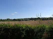 De Saksische steeg van het haag Engelse land northamptonshire Royalty-vrije Stock Foto's