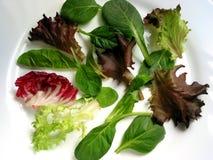 De salade van de baby maakt 1 groen Stock Foto's