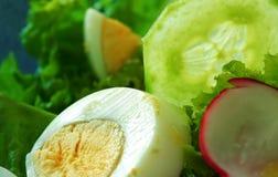 De salade van de lente Stock Foto's