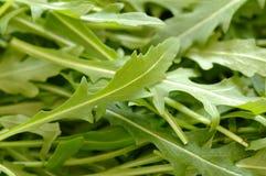 De Salade van de raket Royalty-vrije Stock Foto's