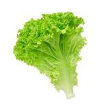 De salade van de sla stock foto