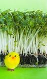 De salade van de witte waterkers, de lente, geel stuk speelgoed kuiken Royalty-vrije Stock Afbeelding