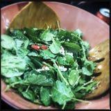 De salade van het de lenteblad stock foto's