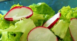 De salade van het seizoen Stock Afbeelding