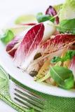 De Salade van het witlof stock foto