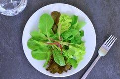 De salade van Mesclun Royalty-vrije Stock Afbeelding