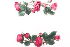 De samenstelling, patroon van rode rozen Stock Foto