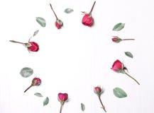 De samenstelling, patroon van rode rozen Royalty-vrije Stock Fotografie