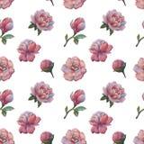De samenstelling van de bloemen van pioen Naadloos waterverfpatroon van bloemen Botanisch patroon Waterverfpioenen stock illustratie