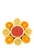 De samenstelling van citrusvruchten Stock Afbeelding