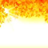 De samenstelling van de de herfstdecoratie met seizoenbladeren Royalty-vrije Stock Foto's