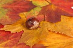De samenstelling van de herfst stock foto's