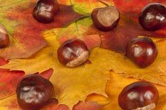 De samenstelling van de herfst stock fotografie
