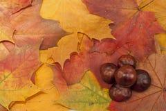 De samenstelling van de herfst royalty-vrije stock afbeelding