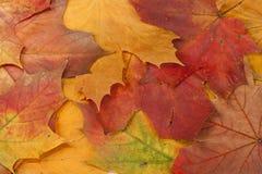 De samenstelling van de herfst royalty-vrije stock fotografie