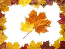 De samenstelling van de herfst stock foto