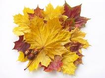 De samenstelling van de herfst Stock Afbeeldingen