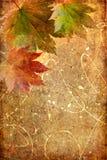 De samenstelling van de herfst Stock Afbeelding